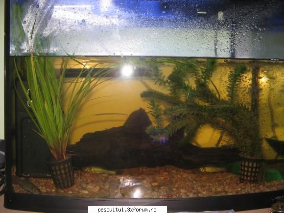 viermi pe peretele acvariului